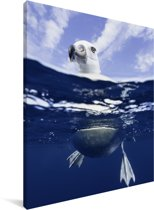 Reuzenalbatros in het water Canvas 120x160 cm - Foto print op Canvas schilderij (Wanddecoratie woonkamer / slaapkamer) XXL / Groot formaat!