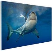 Grote witte haai Glas 90x60 cm - Foto print op Glas (Plexiglas wanddecoratie)