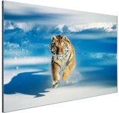 Siberische tijger in de aanval Aluminium 180x120 cm - Foto print op Aluminium (metaal wanddecoratie)
