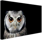 Close-up uil Canvas 60x40 cm - Foto print op Canvas schilderij (Wanddecoratie)