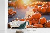 Fotobehang vinyl - Stapel heldere en oranje pompoenen tijdens een zonnige dag breedte 360 cm x hoogte 240 cm - Foto print op behang (in 7 formaten beschikbaar)
