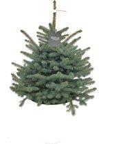 Kerstboom. Deze kerstbomen zijn opgepot met kluit. Kerstboom kant en klaar aangeleverd in sierpot. Picea Pungens Glauca Super Blue, Blauwspar met kluit en sierpot.