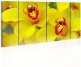 Schilderij - Prachtige gele kleuren, orchidee