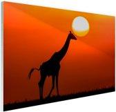Giraffe bij zonsondergang Glas 90x60 cm - Foto print op Glas (Plexiglas wanddecoratie)