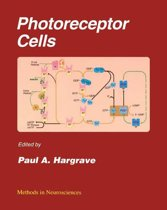 Photoreceptor Cells