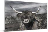 Schattige Schotse hooglander zwart wit Aluminium 120x80 cm - Foto print op Aluminium (metaal wanddecoratie)