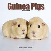 Guinea Pigs Calendar 2020