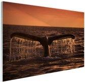 Walvisstaart bij zonsondergang Glas 90x60 cm - Foto print op Glas (Plexiglas wanddecoratie)