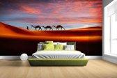 Woestijn met kamelen Fotobehang 380x265