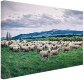 Kudde schapen  Canvas 80x60 cm - Foto print op Canvas schilderij (Wanddecoratie woonkamer / slaapkamer) / Dieren Canvas Schilderijen