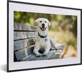 Foto in lijst - Labrador Retriever ligt op een bankje fotolijst zwart met witte passe-partout klein 40x30 cm - Poster in lijst (Wanddecoratie woonkamer / slaapkamer)