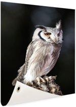 Dwergooruil Tuinposter 80x120 cm - Tuindoek / Buitencanvas / Schilderijen voor buiten (tuin decoratie)