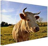Koe in de natuur Canvas 30x20 cm - Foto print op Canvas schilderij (Wanddecoratie)