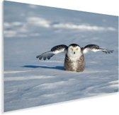 Sneeuwuil met gestrekte vleugels in de sneeuw Plexiglas 30x20 cm - klein - Foto print op Glas (Plexiglas wanddecoratie)