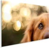 De twinkeling in het oog van de Golden Retriever Plexiglas 90x60 cm - Foto print op Glas (Plexiglas wanddecoratie)