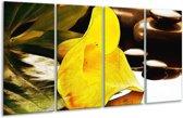 Glasschilderij Bloem   Geel, Bruin, Groen   160x80cm 4Luik   Foto print op Glas    F004770