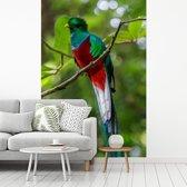 Fotobehang vinyl - Quetzal op een boomtak in Monteverde Cloud Forest breedte 180 cm x hoogte 270 cm - Foto print op behang (in 7 formaten beschikbaar)