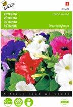 Petunia - Petunia nana compacta - set van 10 stuks