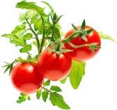 Click And Grow navulling - Tomaat