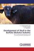 Development of Skull in the Buffalo (Bubalus Bubalis)