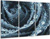 Glas schilderij Roos | Blauw | 120x80cm 3Luik | Foto print op Glas |  F006486
