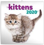 Kittens Kalender 2020