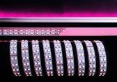 KapegoLED Flexible LED stripe, 5050-2x30-24V-RGB+6000K-3m, RGB + coldwhite, constant voltage, 24V DC, power / power consumption: 75,00 W / 75,00 W, length: 3000 mm, EEC: A, IP20