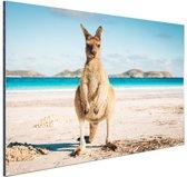 Kangoeroe op het strand Australie Aluminium 90x60 cm - Foto print op Aluminium (metaal wanddecoratie)