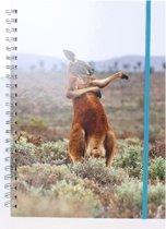 The Comedy Wildlife Notitieboek A4 Kangaroo