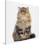 Portret van een kleurrijke Perzische kat Canvas 90x90 cm - Foto print op Canvas schilderij (Wanddecoratie woonkamer / slaapkamer) / Huisdieren Canvas Schilderijen