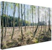 Berkenbomen in Europa Canvas 180x120 cm - Foto print op Canvas schilderij (Wanddecoratie woonkamer / slaapkamer) XXL / Groot formaat!