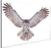Vliegende uil Aluminium 90x60 cm - Foto print op Aluminium (metaal wanddecoratie)