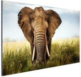 Afrikaanse olifant vooraanzicht Aluminium 90x60 cm - Foto print op Aluminium (metaal wanddecoratie)