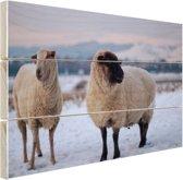 Twee schapen in de sneeuw Hout 60x40 cm - Foto print op Hout (Wanddecoratie)