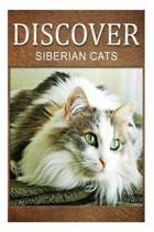 Siberian Cats - Discover