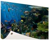Levendige onderwaterwereld Tuinposter 200x100 cm - Tuindoek / Buitencanvas / Schilderijen voor buiten (tuin decoratie) XXL / Groot formaat!
