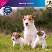 Jack Russell Terrier Kalender 2020