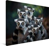 Groepje Ringstaartmaki's kijkend in de camera Canvas 60x40 cm - Foto print op Canvas schilderij (Wanddecoratie woonkamer / slaapkamer) / Wilde dieren Canvas Schilderijen