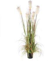 Mica Decorations pluimgras foxtail in plastic pot maat in cm: 180