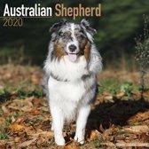 Australian Shepherd Calendar 2020