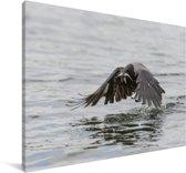 Bonte kraai vliegt laag over het water Canvas 60x40 cm - Foto print op Canvas schilderij (Wanddecoratie woonkamer / slaapkamer)