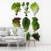 Fotobehang vinyl - Negen verschillende soorten sla breedte 165 cm x hoogte 220 cm - Foto print op behang (in 7 formaten beschikbaar)