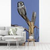 Fotobehang vinyl - Sperweruil in de top van een boom breedte 235 cm x hoogte 350 cm - Foto print op behang (in 7 formaten beschikbaar)