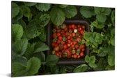 Een mand met aardbeien Aluminium 90x60 cm - Foto print op Aluminium (metaal wanddecoratie)