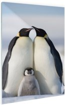 Pinguingezin  Glas 60x90 cm - Foto print op Glas (Plexiglas wanddecoratie)