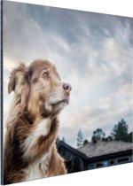 Starende hond Aluminium 60x40 cm - Foto print op Aluminium (metaal wanddecoratie)
