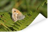 Een vlinder zit op de adelaarsvaren Poster 120x80 cm - Foto print op Poster (wanddecoratie woonkamer / slaapkamer)
