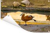 Een casarca staat voor een meertje Tuinposter 120x80 cm - Tuindoek / Buitencanvas / Schilderijen voor buiten (tuin decoratie)