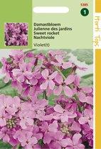 Hortitops Zaden - Damastbloem Violet (Hesperis Matronalis)