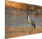 Jufferkraanvogel aan het water Canvas 140x90 cm - Foto print op Canvas schilderij (Wanddecoratie woonkamer / slaapkamer)